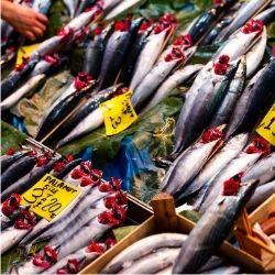 que pescados tienen mas colágeno